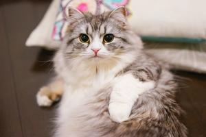 猫の繁殖事業